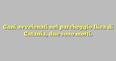 Cani avvelenati nel parcheggio Ikea di Catania, due sono morti.